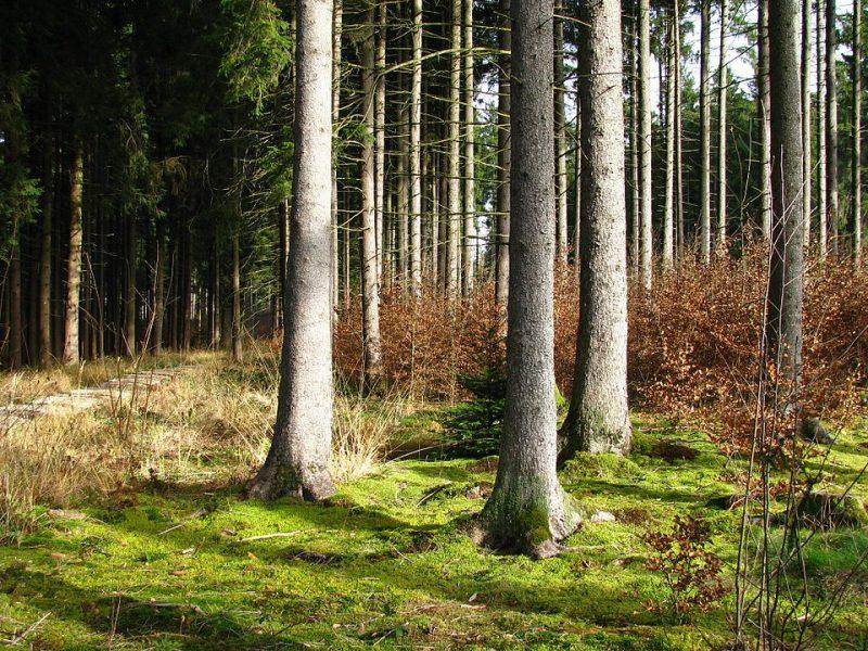 Geplante Rodung von ca. 10 ha Bannwald im Forst Kasten