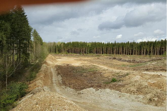 Klima 2021: Baumschutz vor Baurecht! Schutzkategorien verschärfen; Neuregelung Ersatzpflanzungen